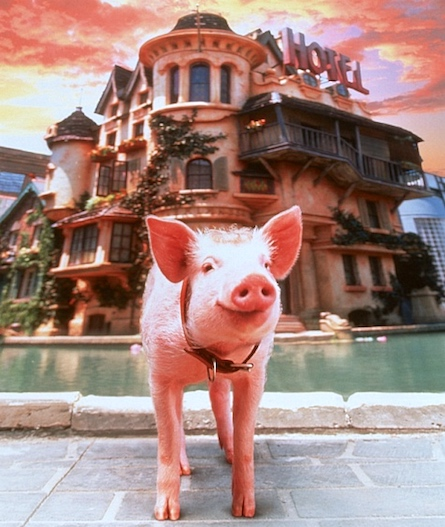 Pig in a hotel